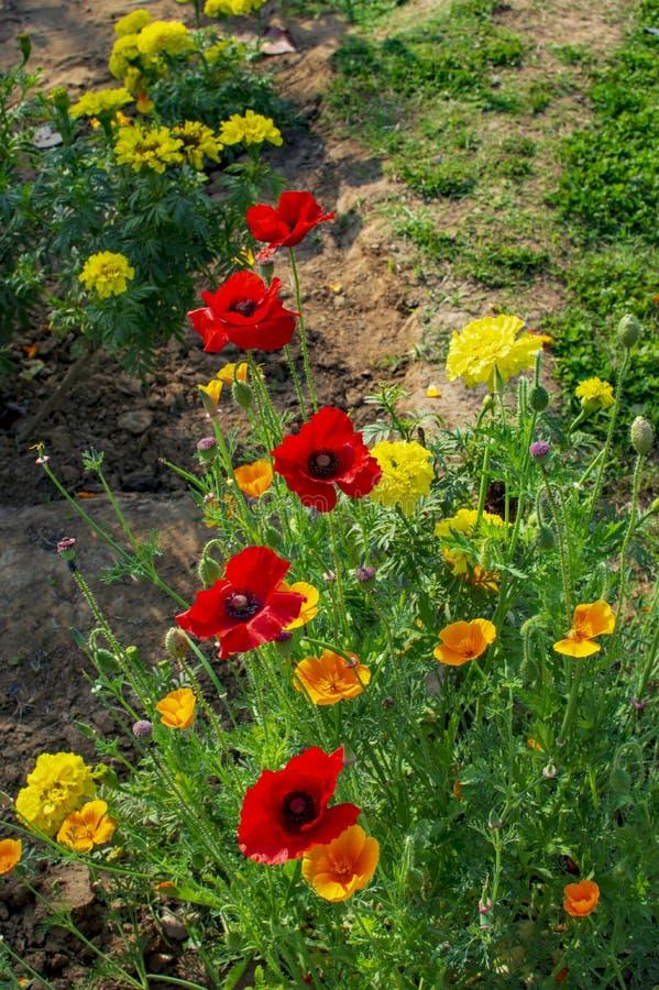 V?rias flores na floresc?ncia do quintal fotografia de stock royalty free