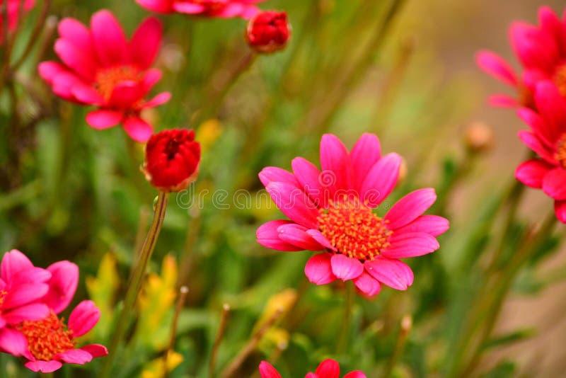 Várias flores vermelhas imagens de stock