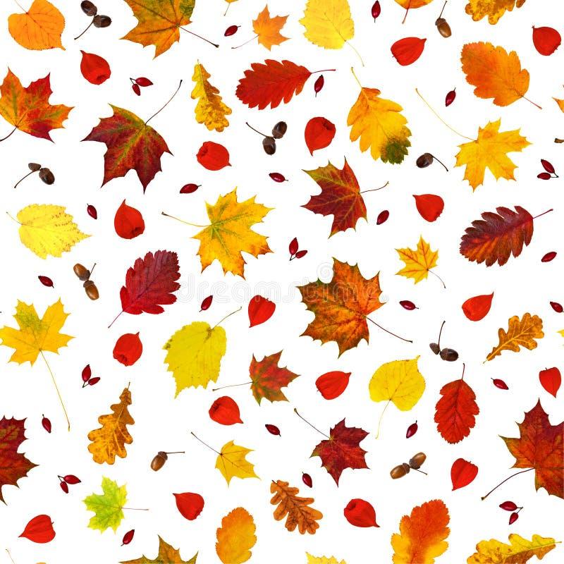 Várias folhas coloridas da queda, alkekengi do Physalis das lanternas do physalis, frutos da cão-rosa e teste padrão sem emenda d imagens de stock royalty free