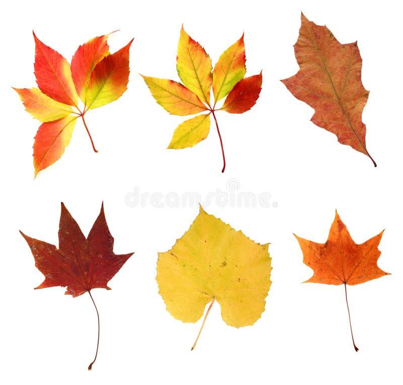 Várias folhas de outono
