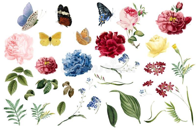 Várias ilustrações românticas da flor e da folha ilustração royalty free
