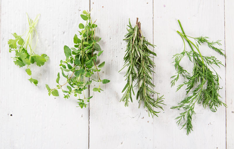 Vário tipo de ervas frescas fotos de stock