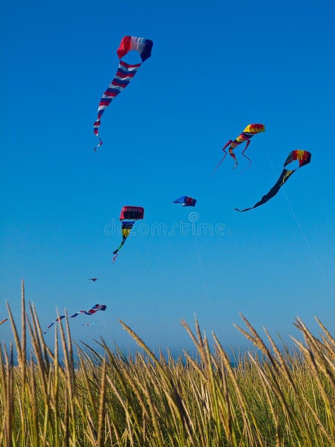 Vário voo colorido dos papagaios imagens de stock royalty free