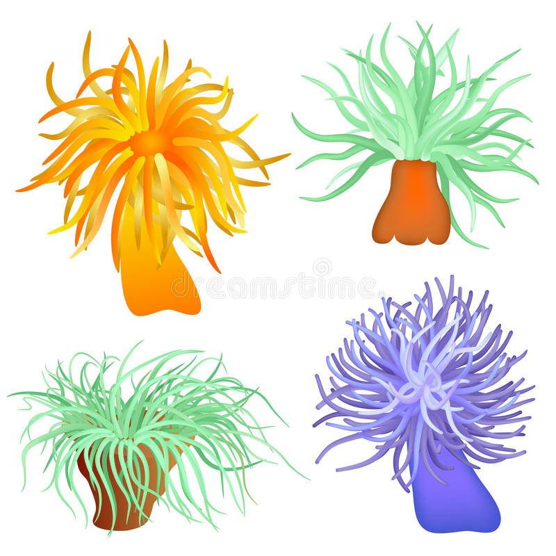 Vários anemones de mar ilustração stock