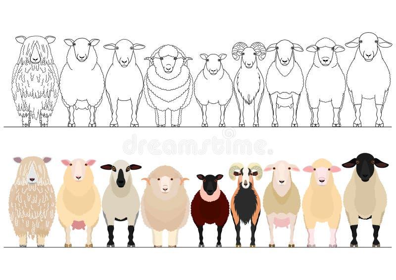 Vários carneiros domésticos em seguido ilustração stock
