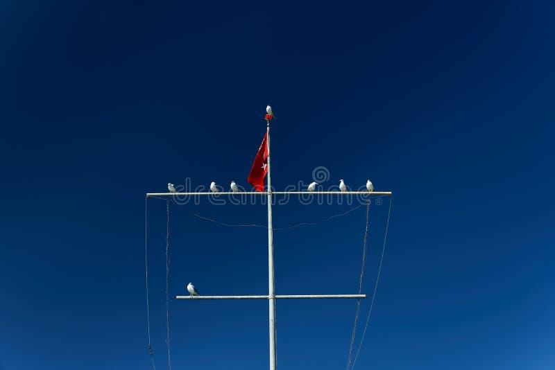 Vários corvos-marinhos estão sentados sobre um mastro com a bandeira turca sobre um fundo de céu azul Aves marinhas Feathered Med foto de stock royalty free