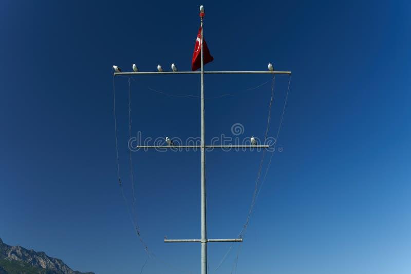 Vários corvos-marinhos estão sentados sobre um mastro com a bandeira turca sobre um fundo de céu azul Aves marinhas Feathered Med imagem de stock