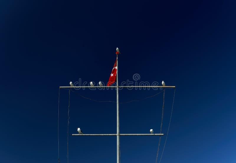 Vários corvos-marinhos estão sentados sobre um mastro com a bandeira turca sobre um fundo de céu azul Aves marinhas Feathered Med fotografia de stock