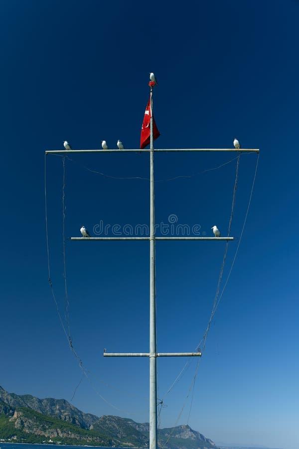 Vários corvos-marinhos estão sentados sobre um mastro com a bandeira turca num fundo de céu azul e na costa montanhosa de Kemer imagem de stock royalty free