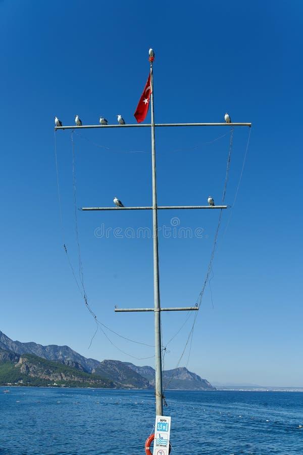 Vários corvos-marinhos estão sentados sobre um mastro com a bandeira turca num fundo de céu azul e na costa montanhosa de Kemer foto de stock royalty free