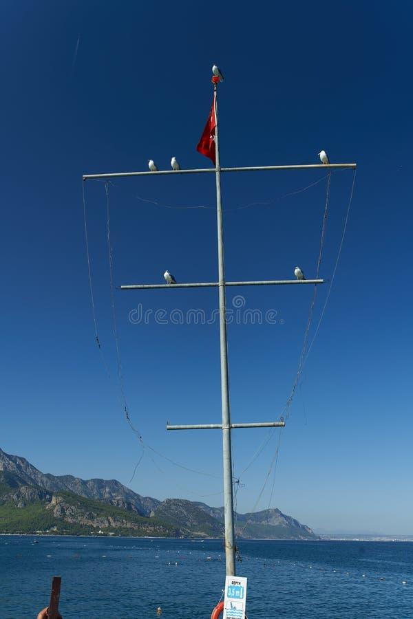 Vários corvos-marinhos estão sentados sobre um mastro com a bandeira turca num fundo de céu azul e na costa montanhosa de Kemer foto de stock
