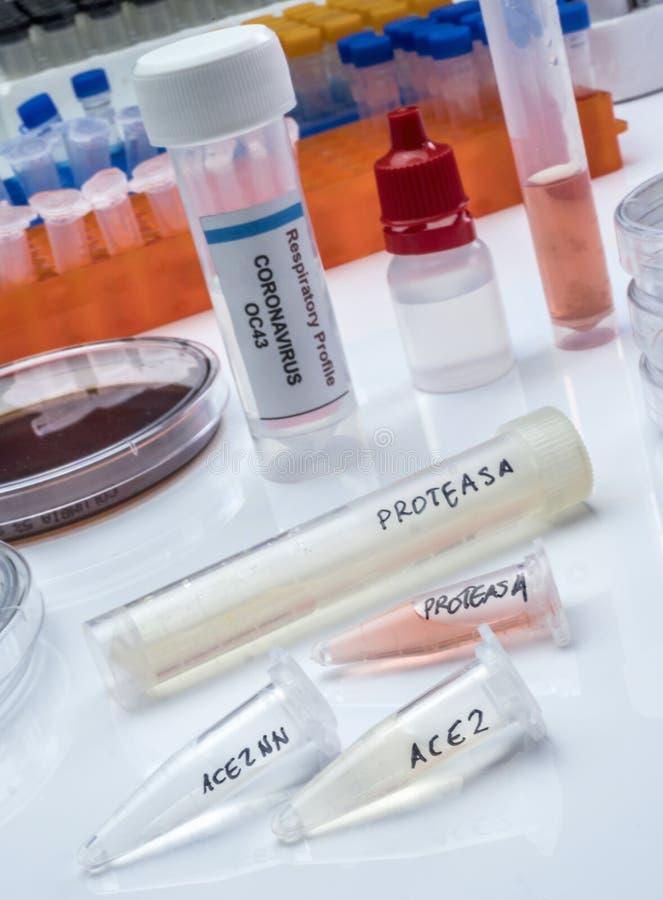 Vários frascos com proteínas proteases solúveis para ativação do síndrome respiratória aguda grave de coronavírus SARS foto de stock royalty free