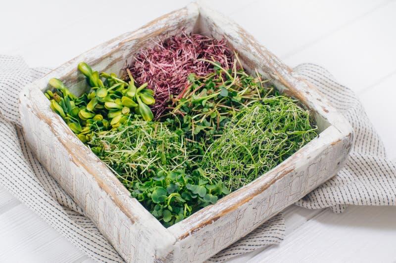 Vários micro brotos dos verdes na caixa de madeira imagem de stock