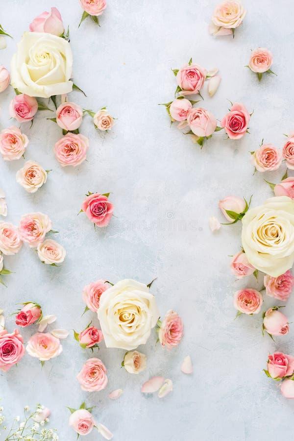 Vários rosas, pétalas e botões em fundo textured foto de stock royalty free