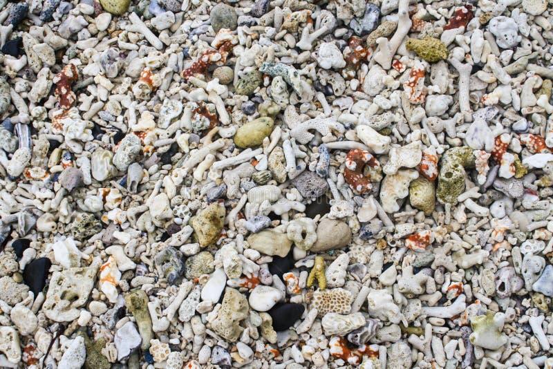 Vários shell do mar, corais e textura coloridos da areia fotos de stock
