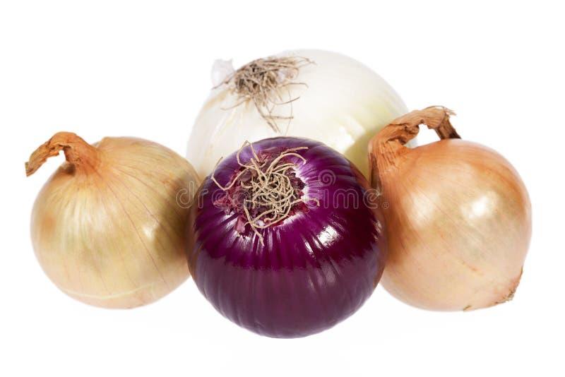 Vários tipos de cebolas isoladas no fundo branco foto de stock