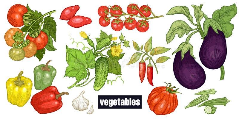 Vários vegetais ajustados ilustração royalty free