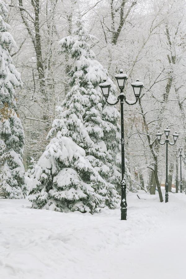 Väder förkylning, vinter i staden Trädfilialer täckte med ny vit snö, och rimfrosten efter snöfall i parkerar på royaltyfri bild