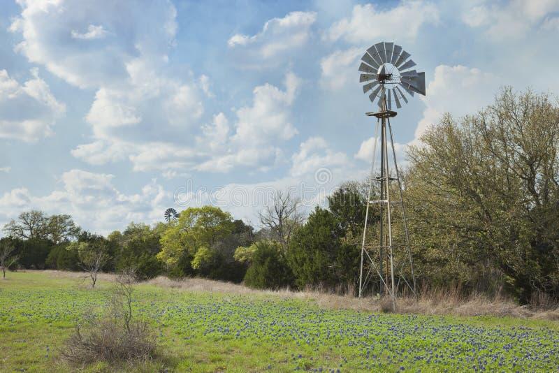 Väderkvarn och bluebonnets i Texas Hill Country fotografering för bildbyråer