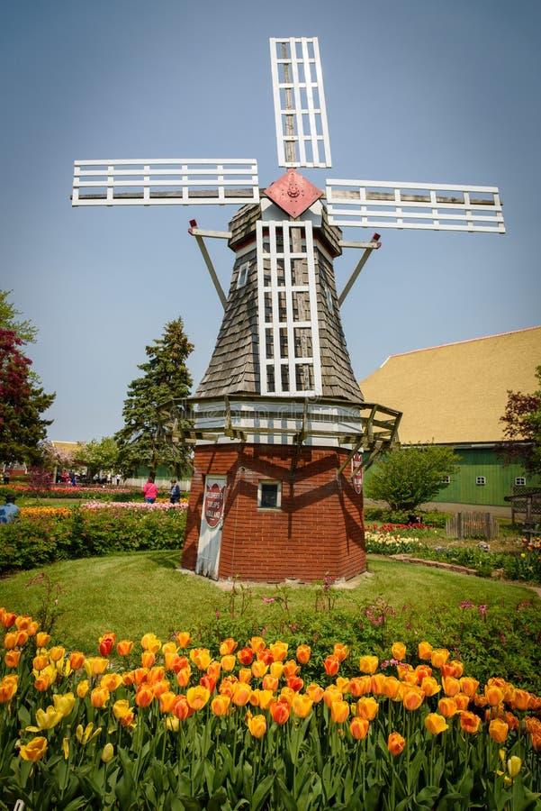 Väderkvarn på en tulpanträdgård royaltyfri foto