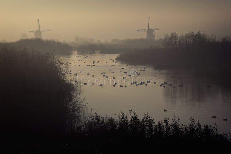 Väderkvarnar av Kinderdijk i morgonmist royaltyfri fotografi