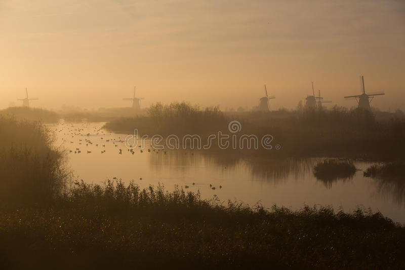 Väderkvarnar av Kinderdijk i morgonmist royaltyfri foto