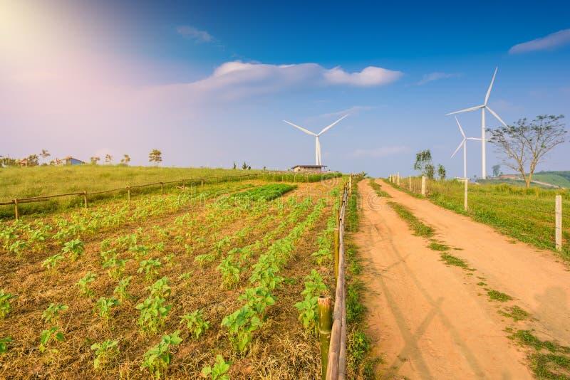 Väderkvarnturbin för elektrisk produktion på Khao Kho, Petchaboon, Thailand royaltyfria bilder