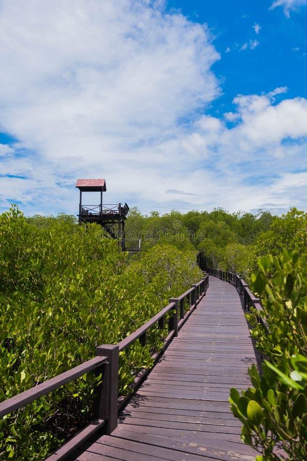 Väg att stå högt mangroveskogen på Pranburi Forest National Park, Prachuap Khiri Khan, Thailand fotografering för bildbyråer