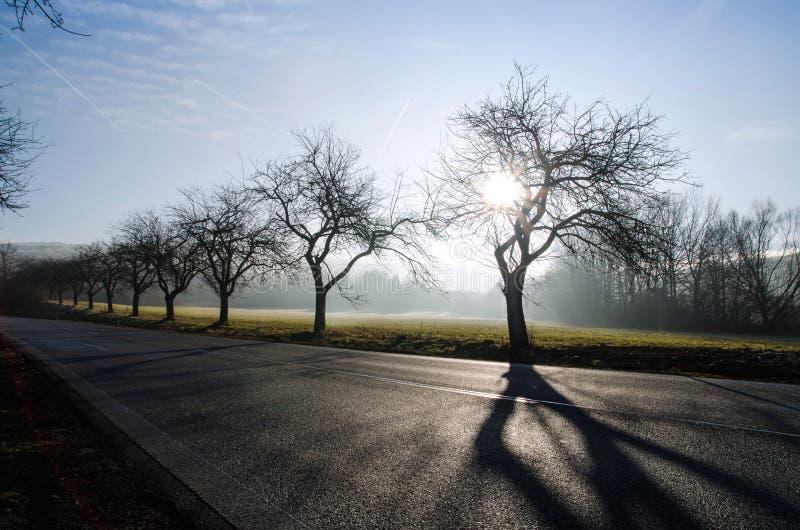 Väg av träd i fältet med abstrakt skugga, utomhus och naturen arkivbilder