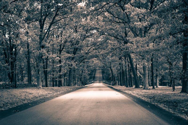 väg för skogkohmak royaltyfria foton