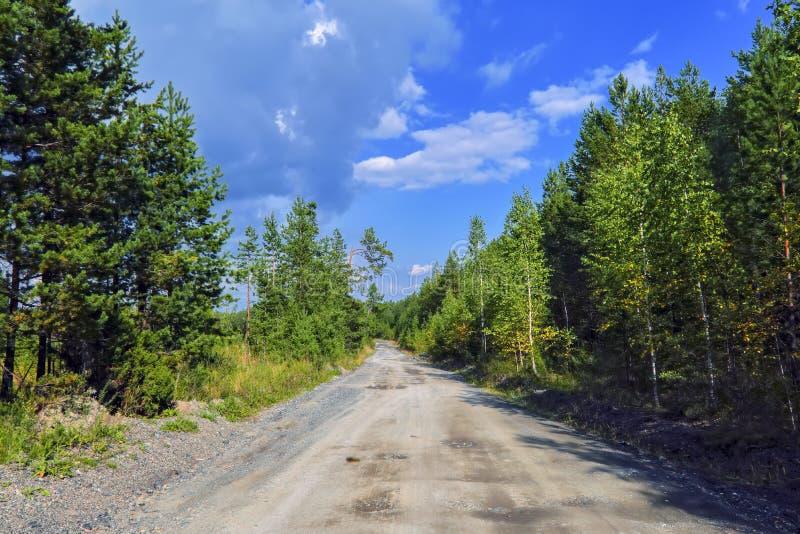 Väg för sommarlandskapskog mot bakgrunden av brisen och himlen royaltyfri fotografi