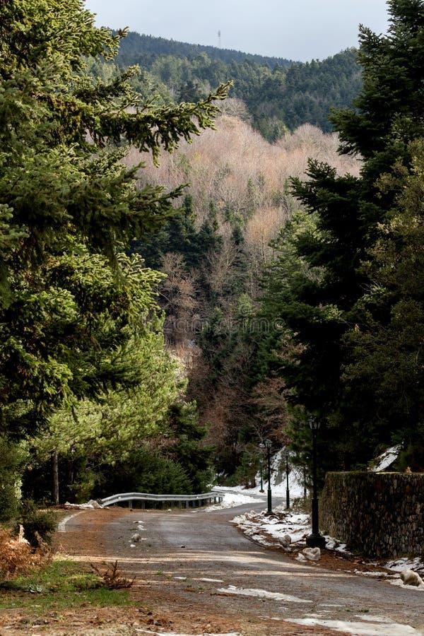 Väg i bergen på ett snöig, vinterdag arkivfoton