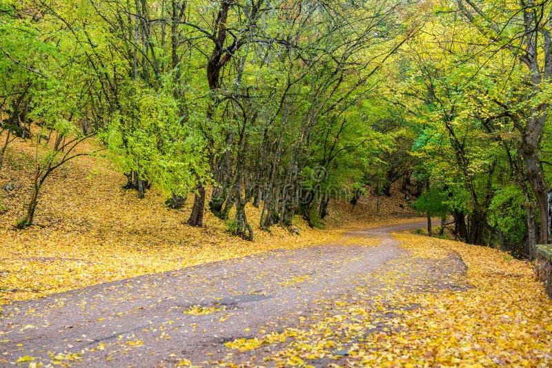 Download Väg i den höstliga skogen arkivfoto. Bild av leaf, oktober - 78730482