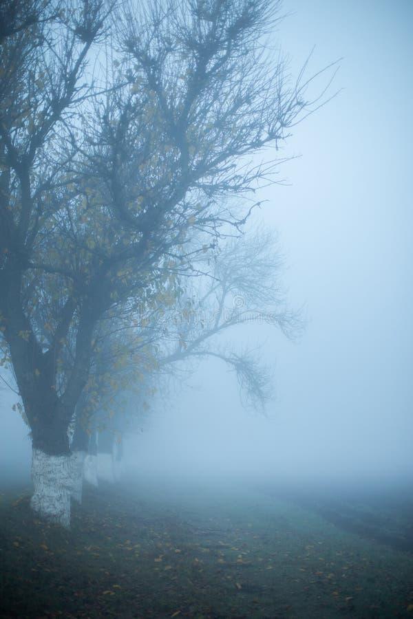 Väg i dimmig tidig höstmorgon Tr?dkonturer vertikalt Utrymme f?r meddelande fotografering för bildbyråer