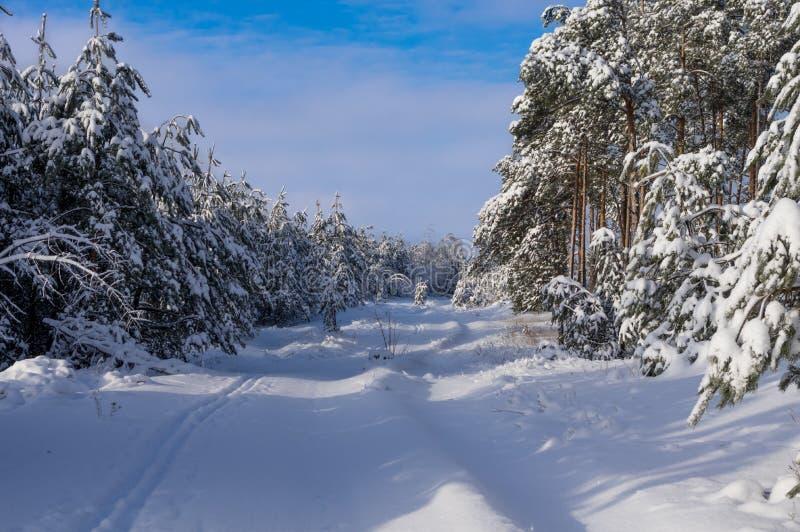 Väg i en snöig skog royaltyfri foto