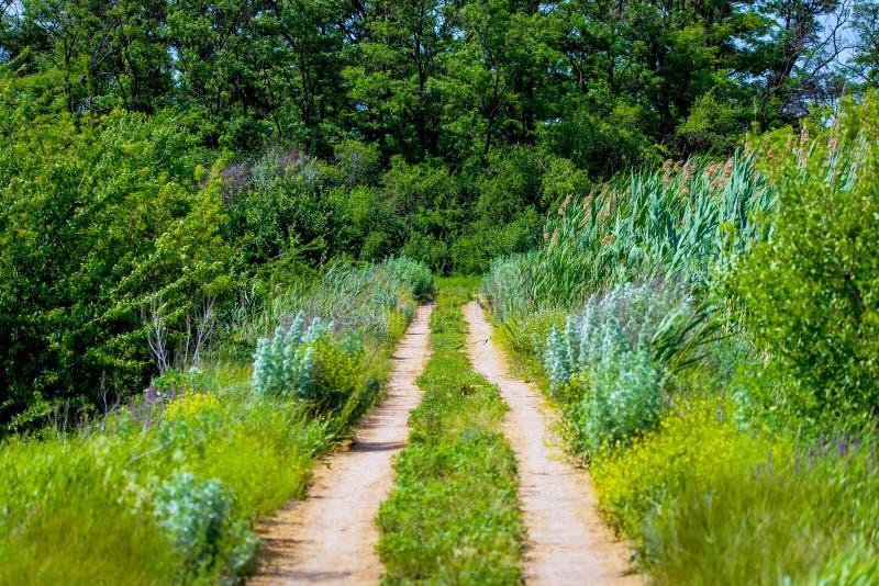 Väg i ett bygdlandskap med en lerig väg och pöl Lantlig smuts f?r extrem bana Sommar landskap med gräs och spårar från arkivfoto
