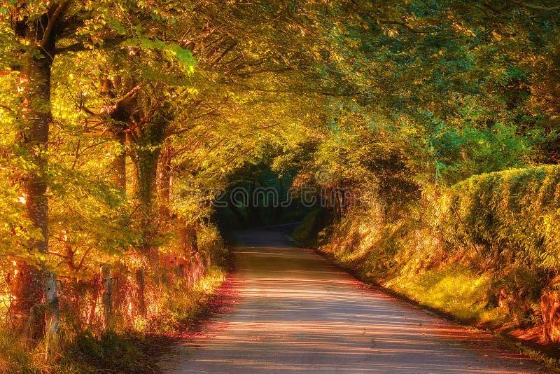 Väg i höstlig skog arkivbilder