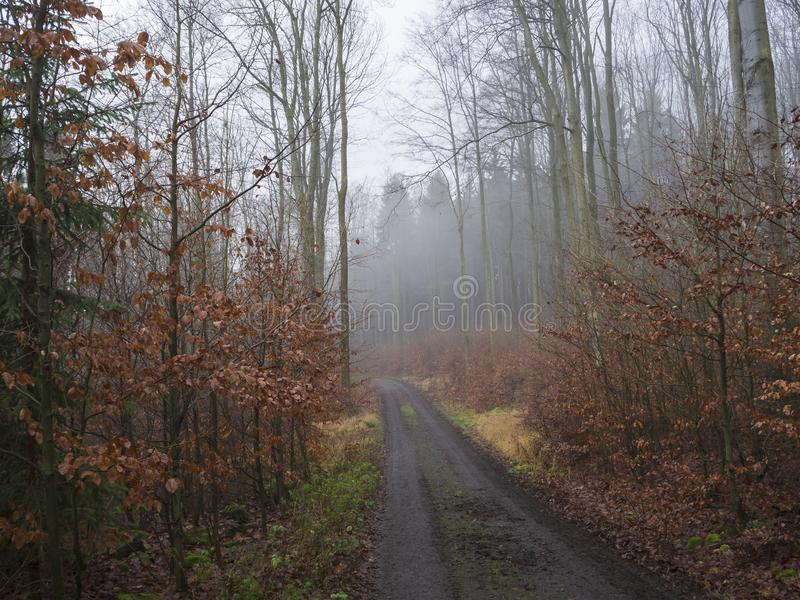 Väg i kalt träd för dimmig höstskog och lynnig la för apelsinsidor royaltyfri bild