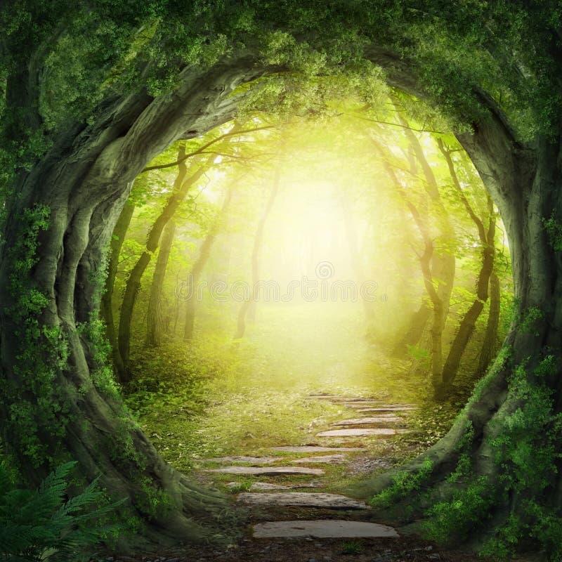 Väg i mörk skog royaltyfria foton