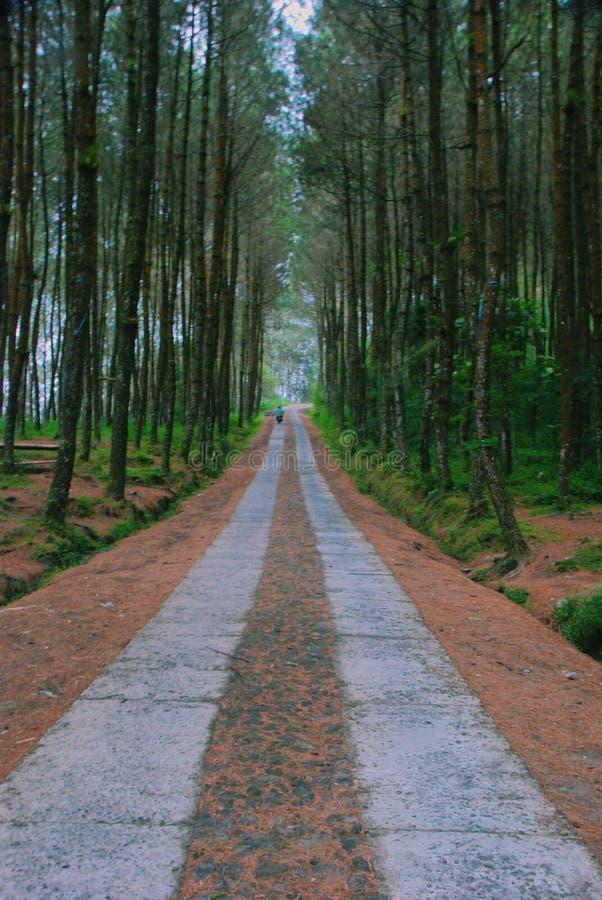 Väg i mitt av den tropiska skogen royaltyfri foto