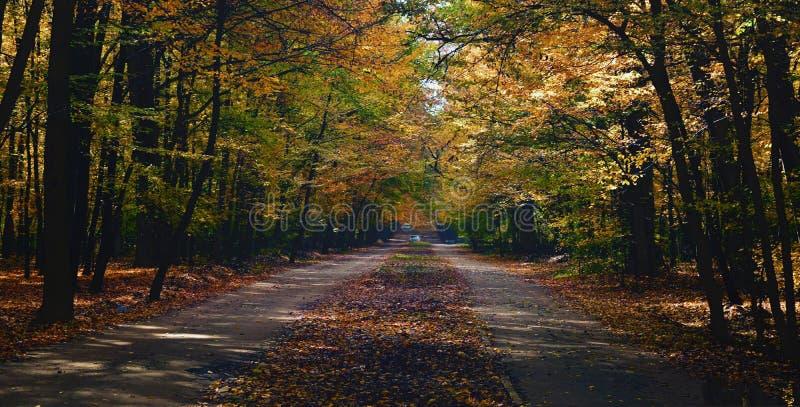 Väg i mitt av skogen arkivfoto