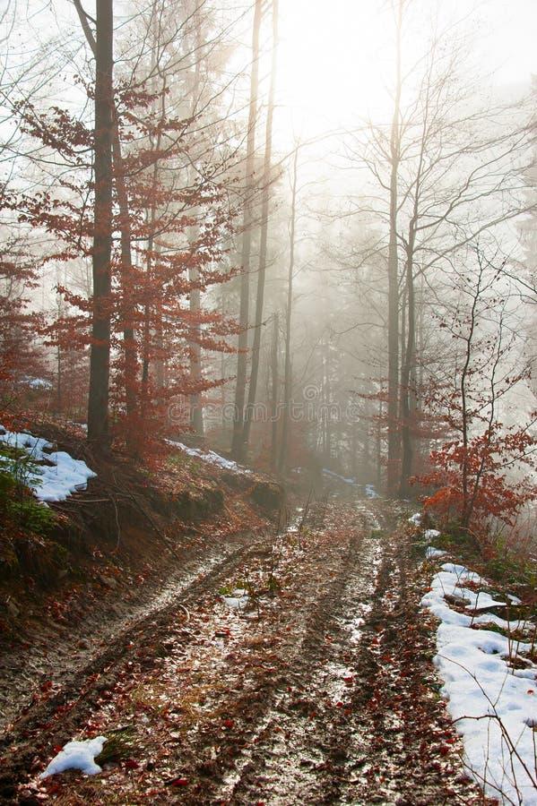 Väg i skogen arkivfoton