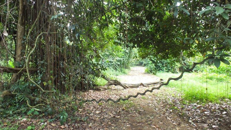 Väg i skogen, västra Java Indonesia royaltyfri fotografi