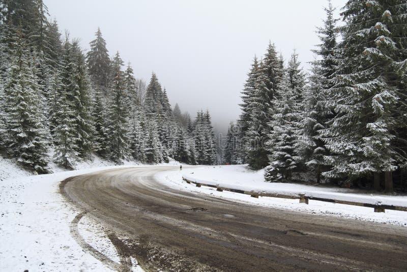 Väg i snöig skog arkivbild