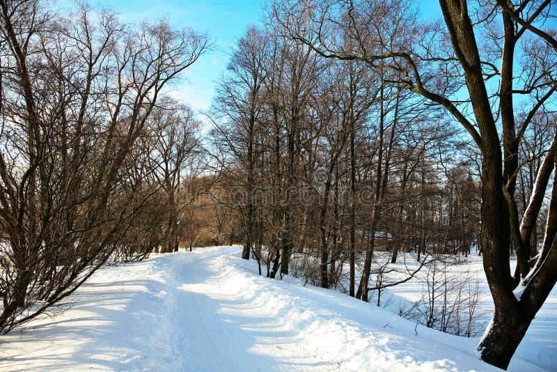 Väg i snöig skog i ljus dag arkivfoto