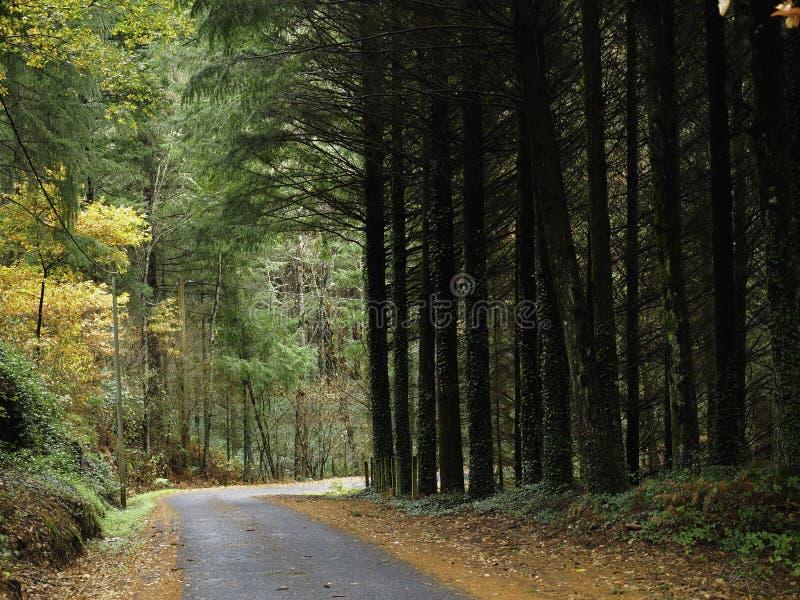 Väg inom en skog arkivbilder
