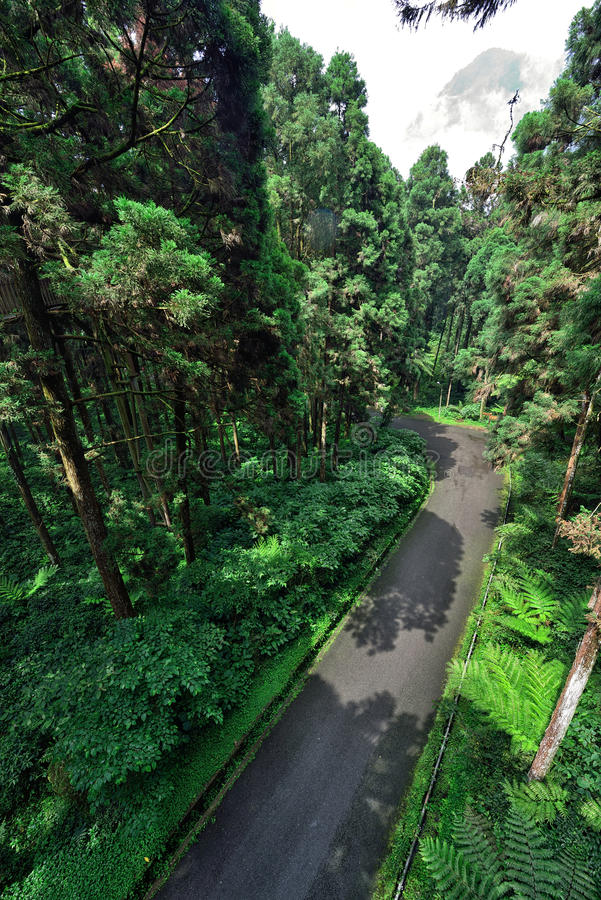 Väg inom skogen fotografering för bildbyråer