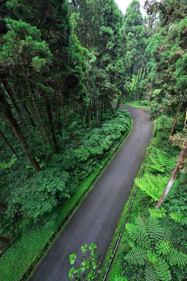 Väg inom skogen royaltyfri foto
