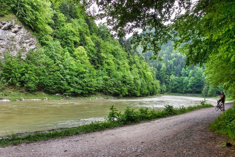 Väg längs den Dunajec floden i den Pieniny nationalparken i sydliga Polen arkivbild
