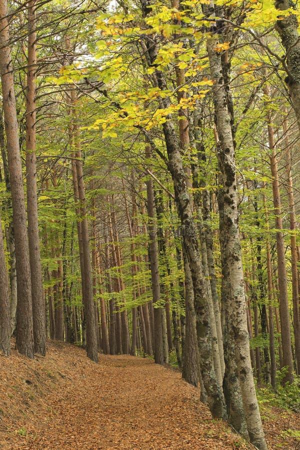 Väg med sidor i skogen fotografering för bildbyråer